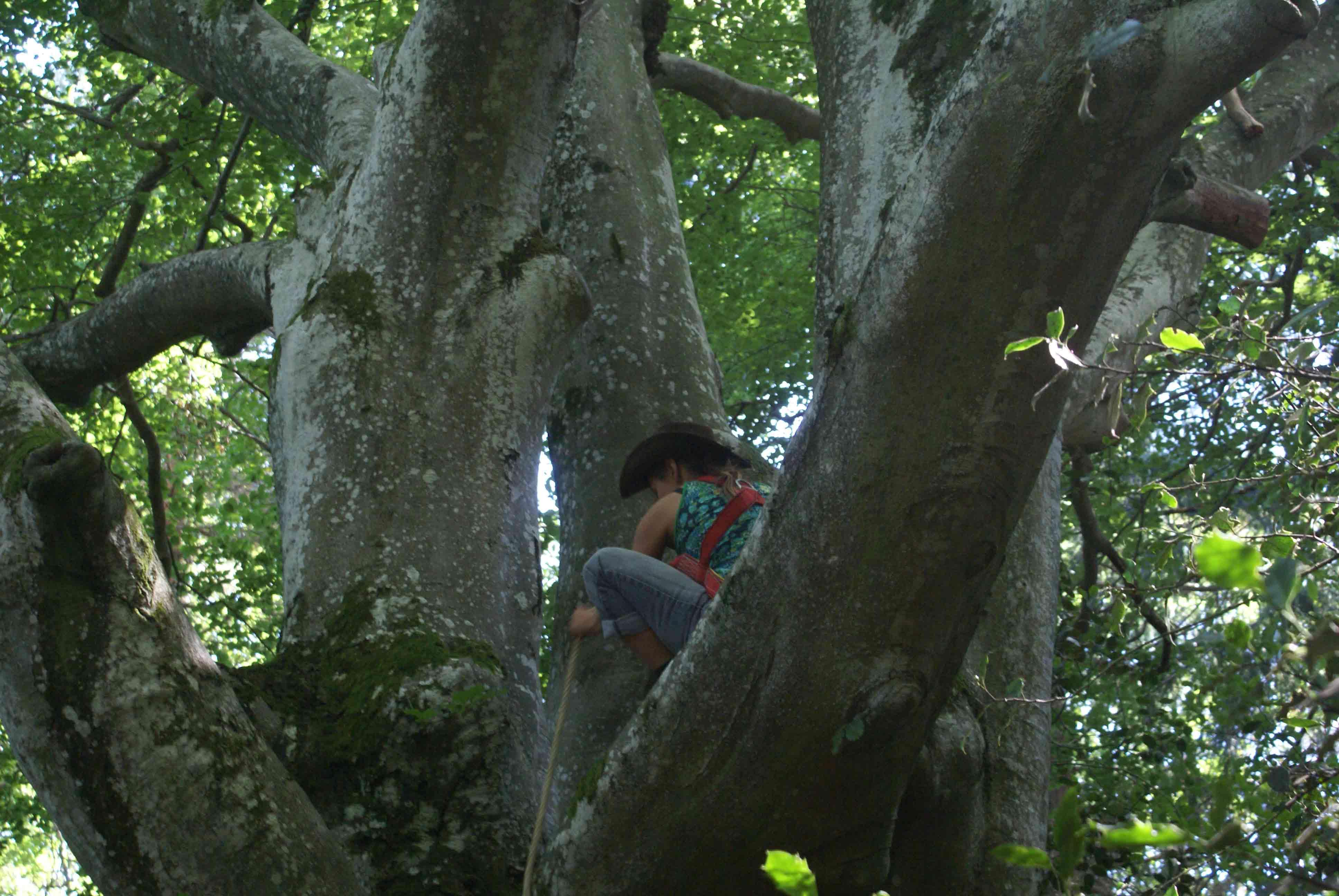 arbre-stef